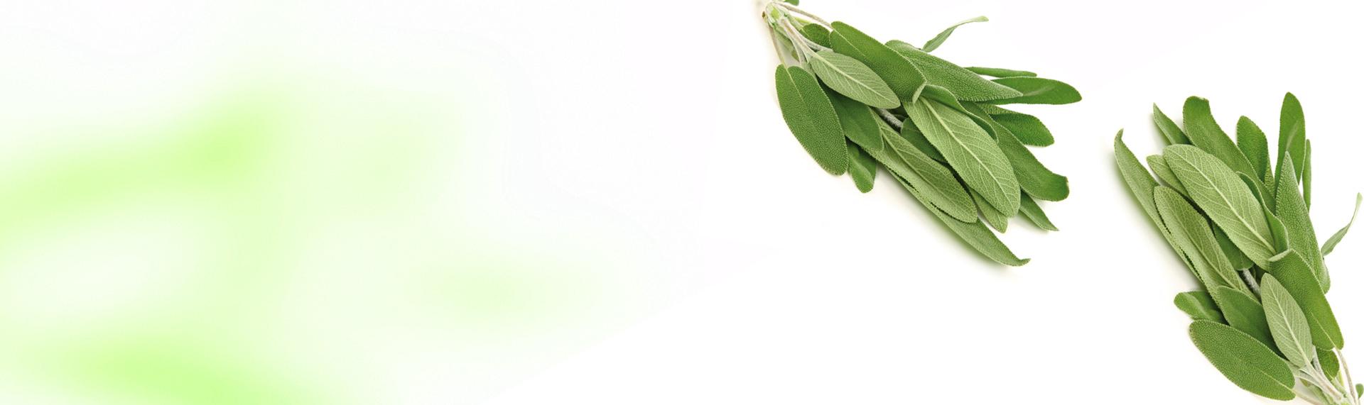 Salvia Cortada